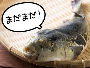 さらに、延長決定!  淡路島3年とらふぐ ご提供期間、2015年3月22日(日)まで!!