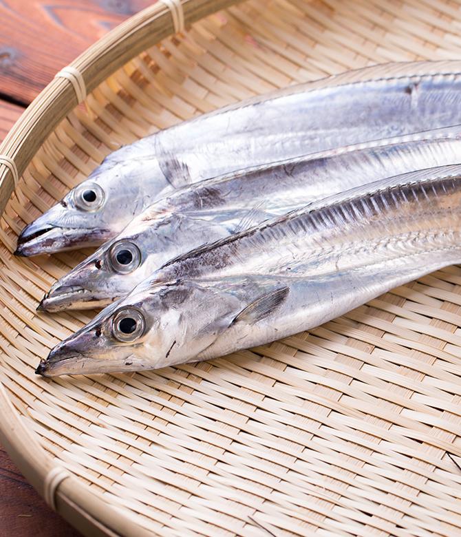 太刀魚画像